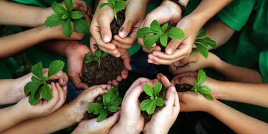 Dia Mundial da Amazônia: 9 profissões para quem ama o meio ambiente | Blog do Zé Moleza