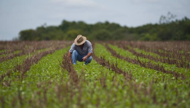 O que você precisa saber para se tornar engenheiro agrônomo | Blog do Zé Moleza